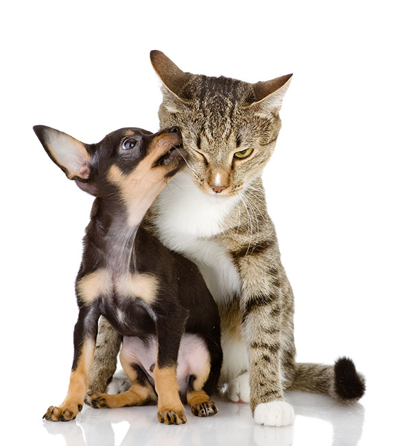 Veterinarians Ottawa, ON | Home | Algonquin Animal Hospital